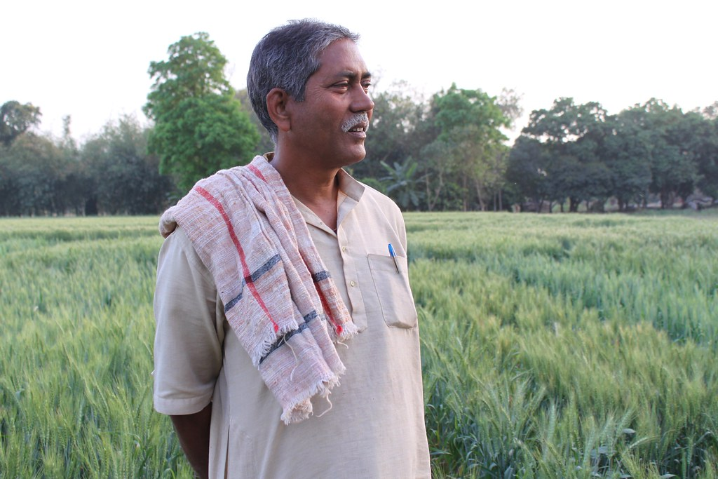 Indian farmer and CSISA partner grows new line for seed pr ...