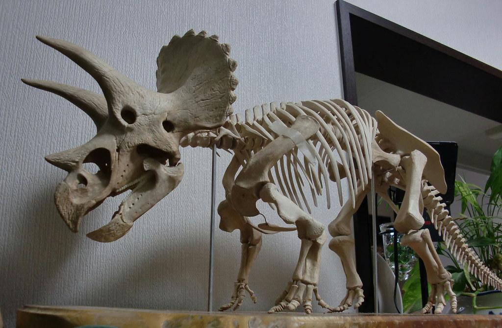Triceratops skeleton model | Ready to send to The Saga ...