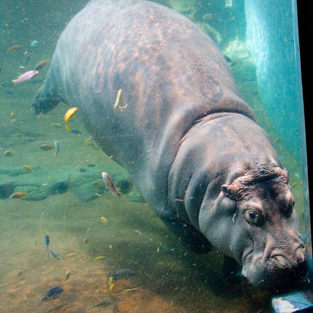 Image Result For Aquarium Adventure