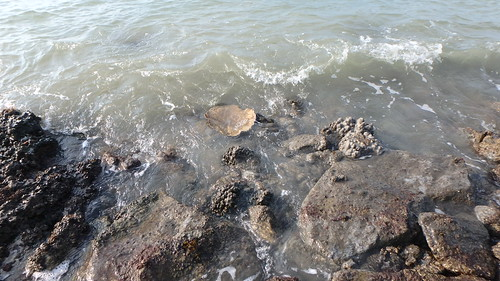 Corals have settled on a long seawall at East Coast Park