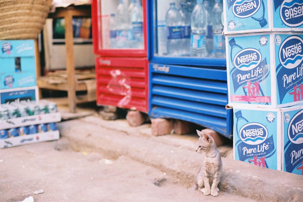 哈利利市集中有獅王風範的小貓
