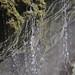 Around Coban 36 - Water drops at river at Semuc Champey