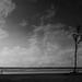 Empty Loneliness