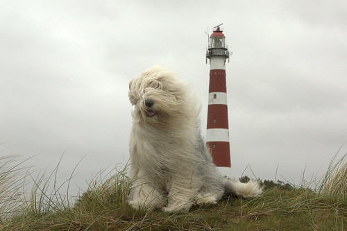 lighthouse dog  * explore * | by dewollewei