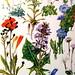 Vintage Botanical Prints Flowers