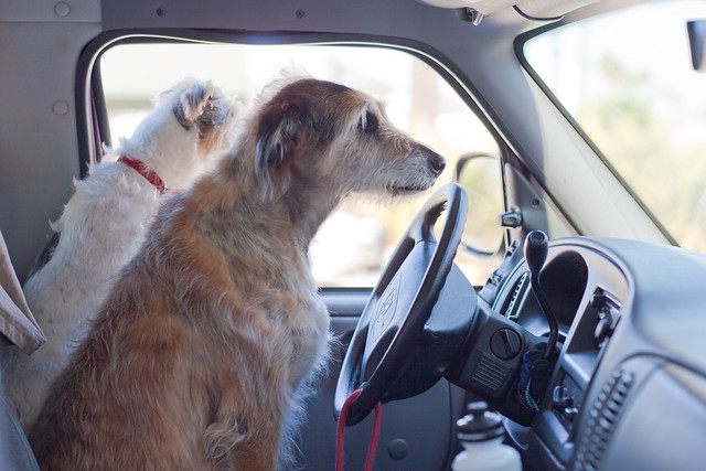 Dogs Driving Cars New Zealand