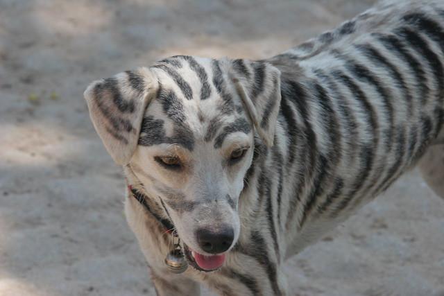 ... dog breeds sled dog breeds most obedient dog breeds rarest dog breeds