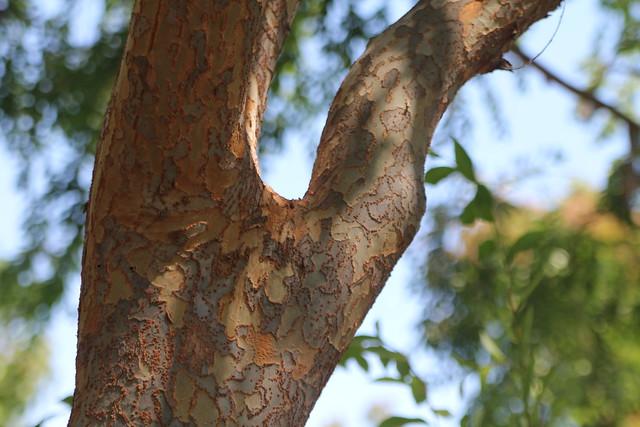 Gilroy Gardens 499 Flickr Photo Sharing