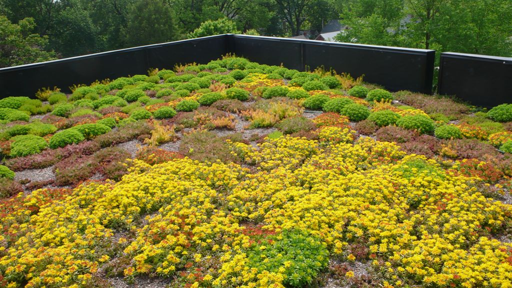 green roof arlington county flickr. Black Bedroom Furniture Sets. Home Design Ideas