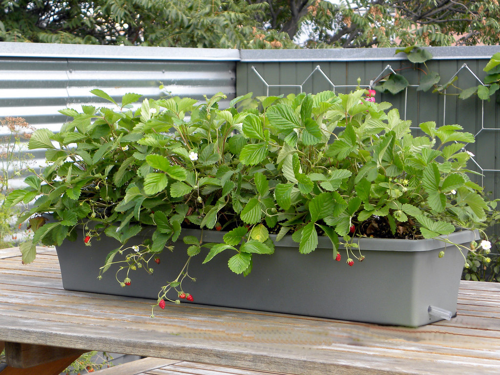 Portable Micro Garden Pmg 187 Window Box Sub Irrigated Pla