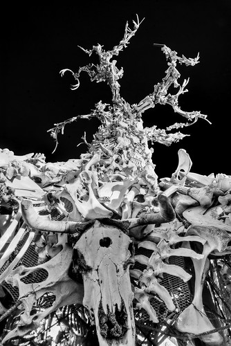 The Bone Tree | by Michael Holden