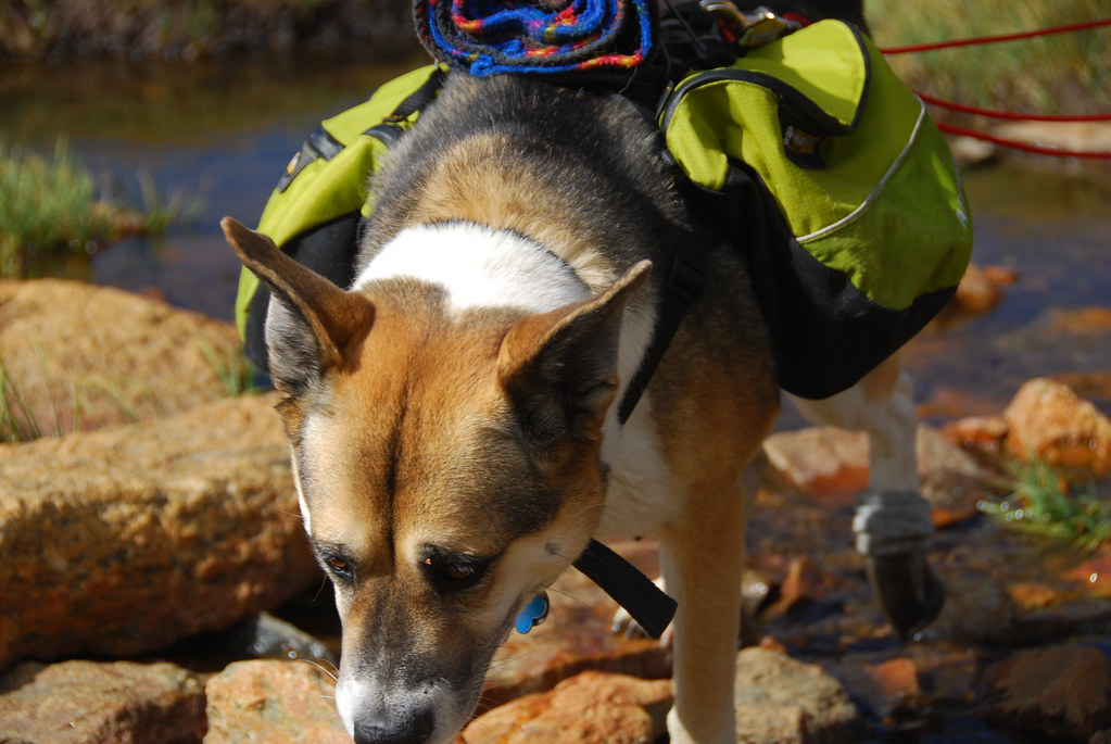 Wilderness Dog Food Recall