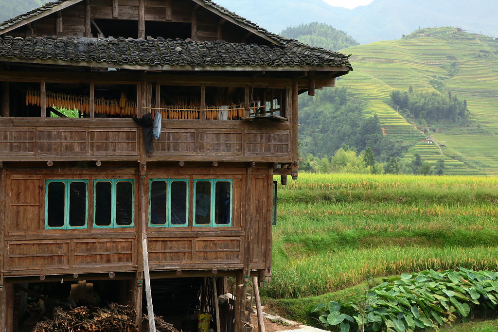 Traditional house in longsheng rice terrace guangxi chin for 100 rice terrace drive columbia sc