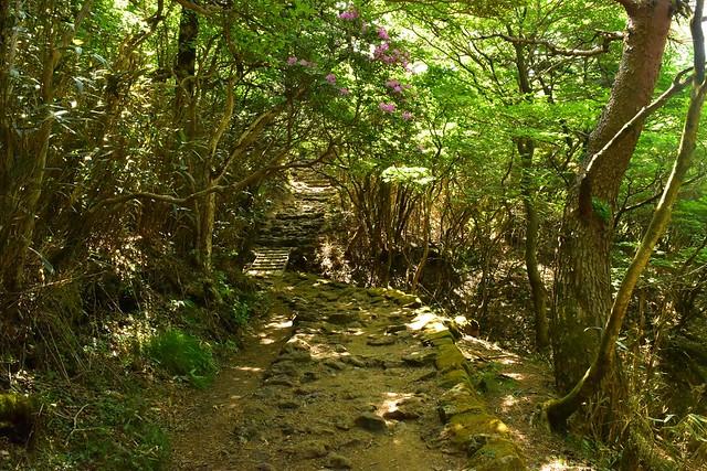 韓国岳大浪池コース 登山道