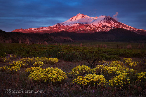Mt Shasta Bloom | by Steve Sieren Photography