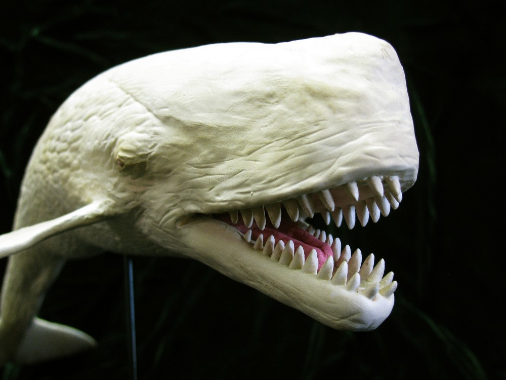 Miocene Whale Leviathan Melvillei