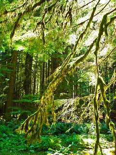 Five years ago: Hoh Temperate Rain forest | by Jelltex