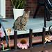 Street cat 3