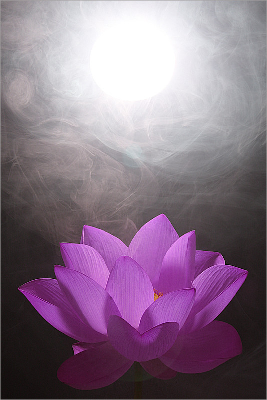 purple flower lotus  flower purple lotus  bahman farzad  flickr, Beautiful flower