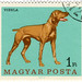 Hungary postage stamp: vizsla dog