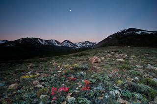 Eastern Sierra Wildflower Moonset | by Jeffrey Sullivan