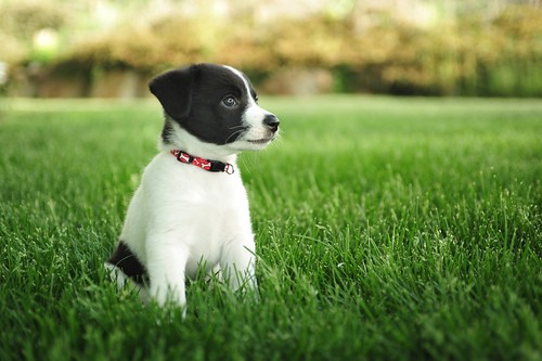Puppy Exposure To Other Dogs