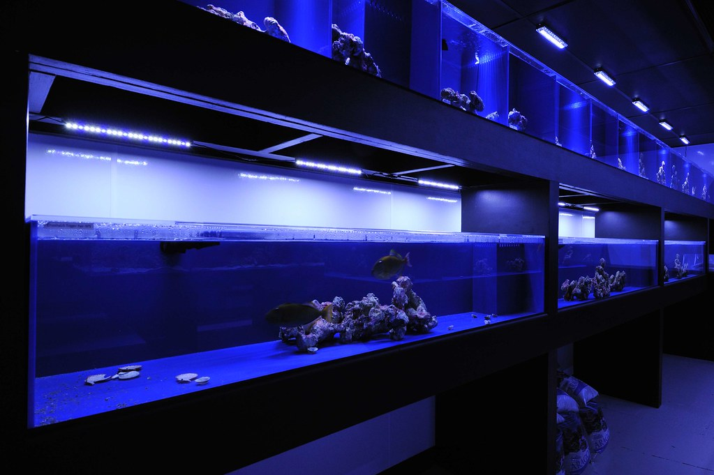Fish holding tanks lit by stunner led strips www for Fish store phoenix