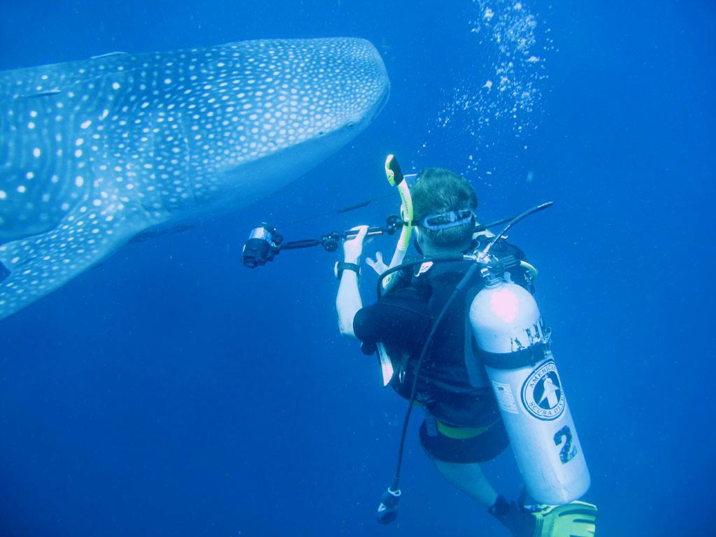 Diving For A Delorean Near West Palm Beach