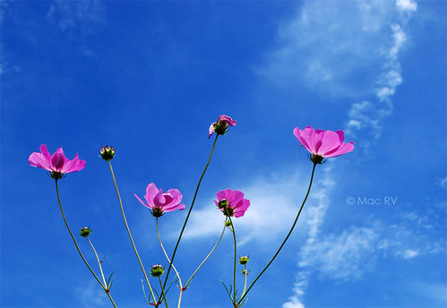Flores y nubes | by Foto Mac rv