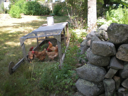 Chicken tractor | by Slow Food Seacoast