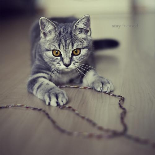 Cat Throw Up Food Diarhea
