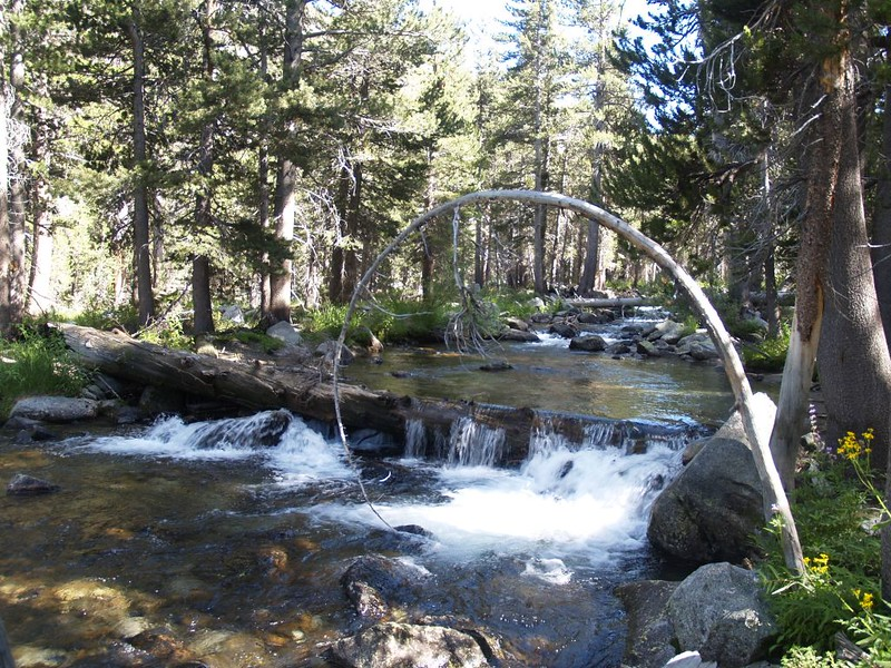 The Lyell Fork of the Tuolumne River gets larger as we descend. Many small streams keep joining it.