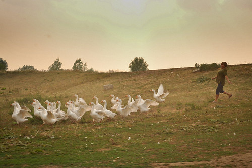 Wild Goose Chase | by goingslowly