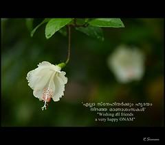 Onam photos on flickr flickr m4hsunfo