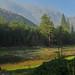 Yosemite - meadow