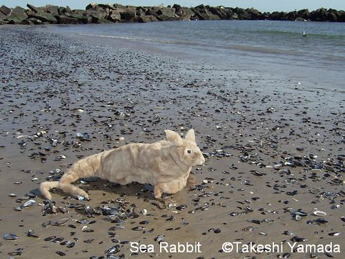 Sea Rabbit | by Dr. Takeshi Yamada.