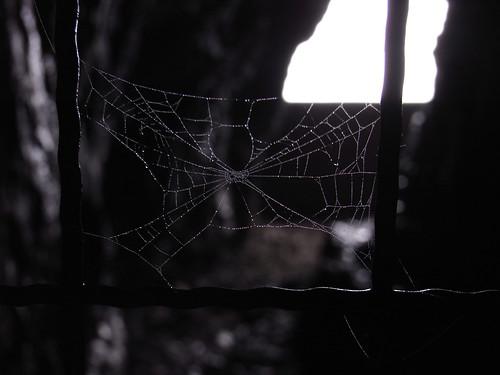 Cobweb decorated salt water