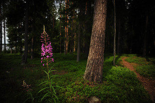 Finland Forest | by goingslowly