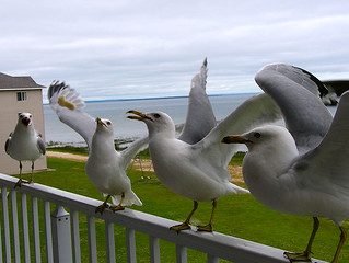 Seagulls from around the US - Mackinaw City, Michigan | by River (Wing-It Vegan)