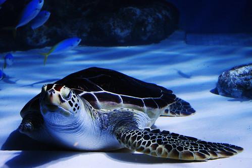 OTARU Aquarium.