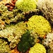 A small collection of moss and lichens