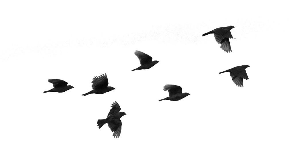 Bird flying away silhouette - photo#7