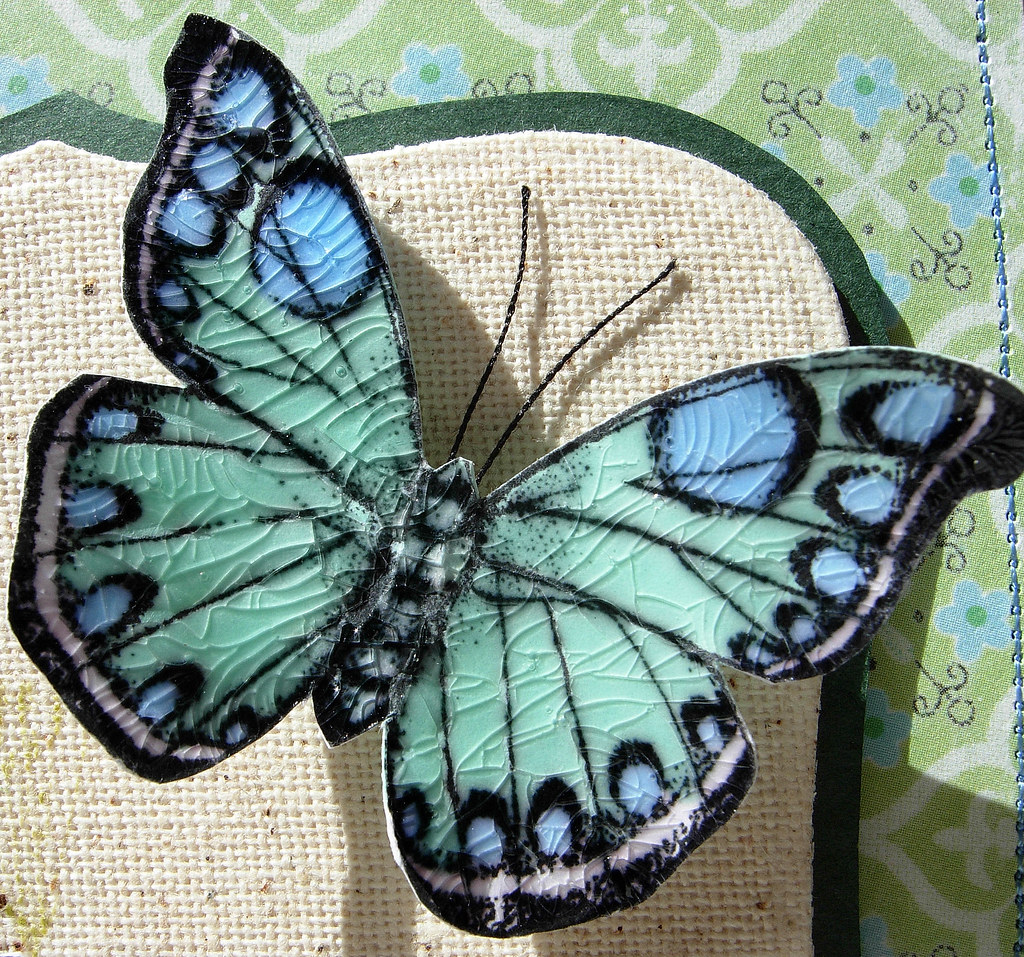 crackled butterflies close up i love the pdcc colours this u2026 flickr