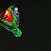 Lotje in vlucht (c) Pim Geerts_IMG_9325