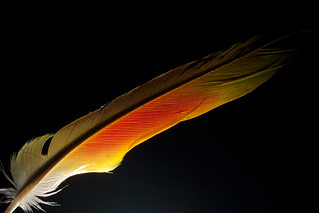 Feather | by Stephen Edmonds