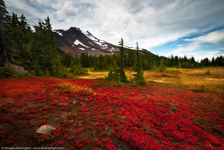 Oregon tundra; a carpet of red, gold, and Mt. Jefferson | by Douglas Remington - Ethereal Light® Photography