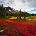 Oregon tundra; a carpet of red, gold, and Mt. Jefferson