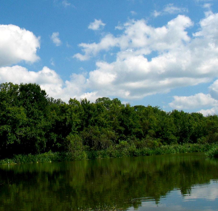 Uf Lake Alice Trees Treeline Water Blue Sky Clouds