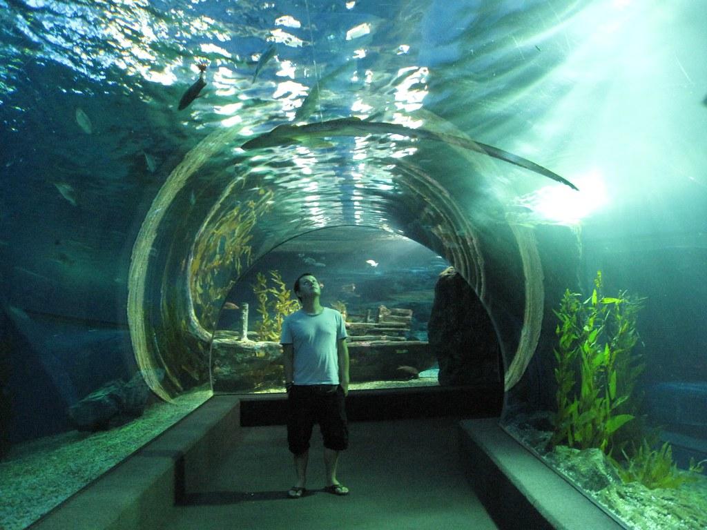 Bangkok: Siam Ocean World, open ocean aquarium ...