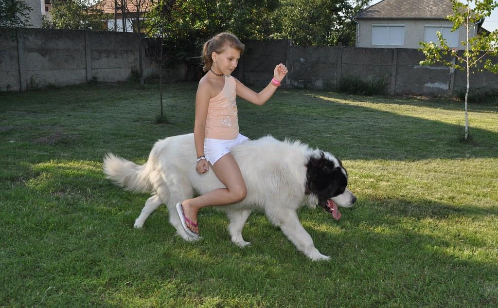 фото riding a dog